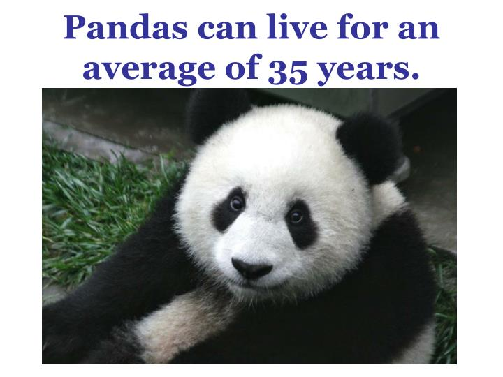 Pandas can live for an average of 35 years.