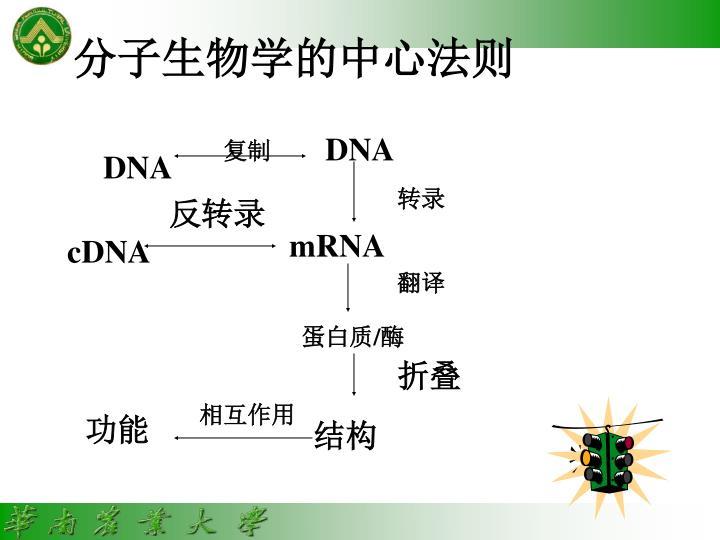 分子生物学的中心法则