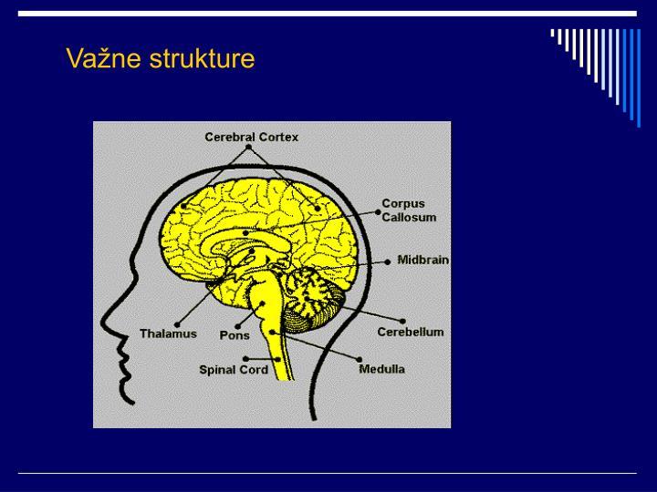 Važne strukture