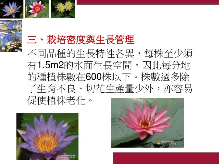 三、栽培密度與生長管理
