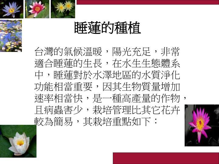 睡蓮的種植