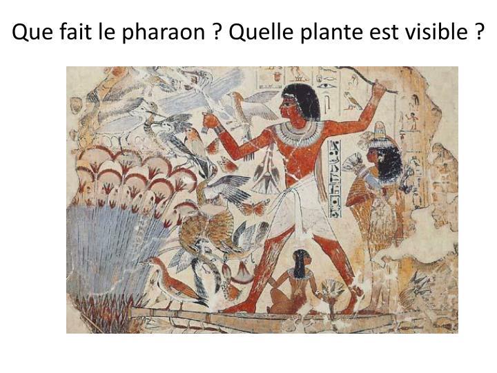 Que fait le pharaon ? Quelle plante est visible ?