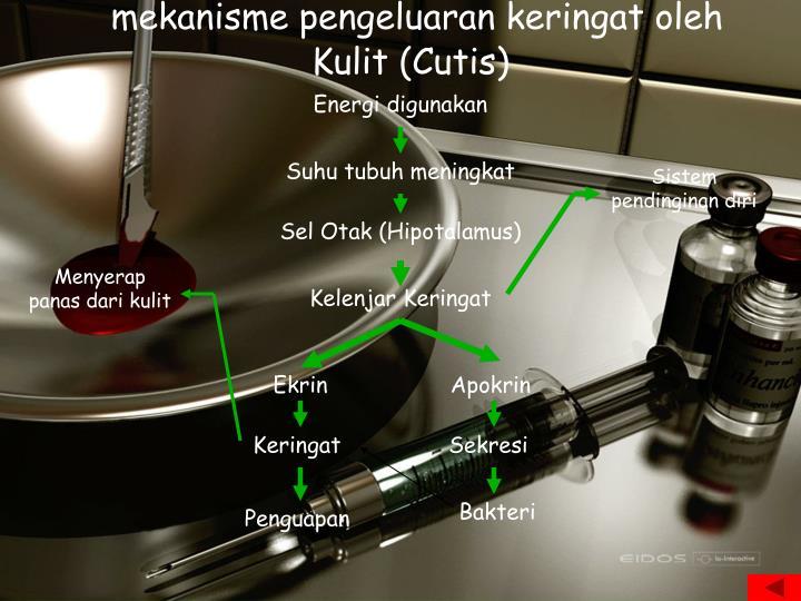 mekanisme pengeluaran keringat oleh Kulit (Cutis)