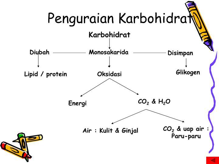 Penguraian Karbohidrat