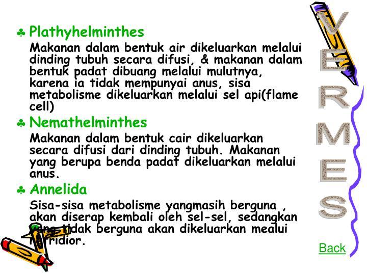 Plathyhelminthes