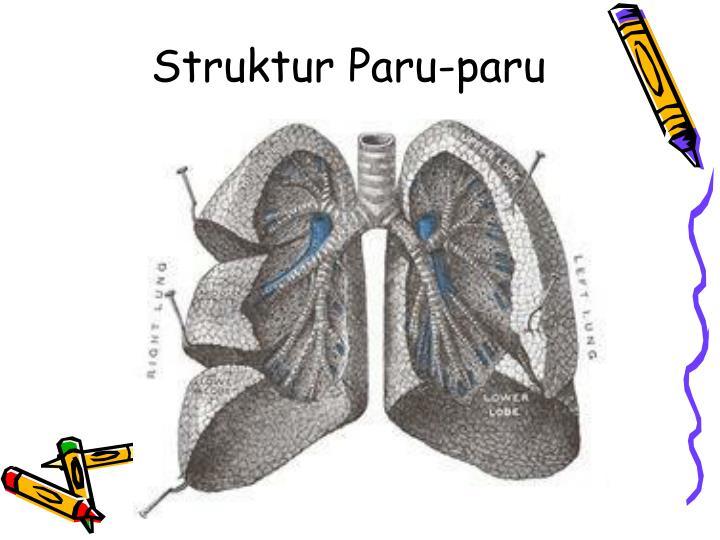 Struktur Paru-paru