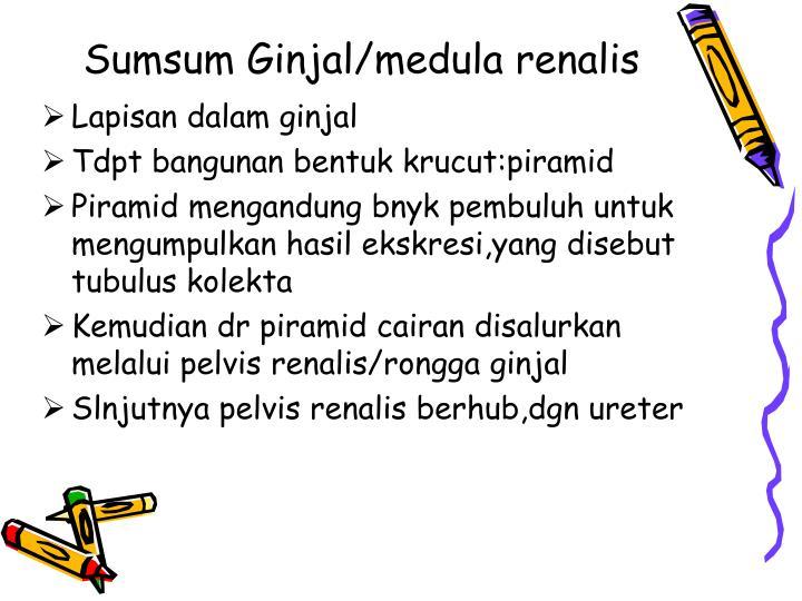 Sumsum Ginjal/medula renalis