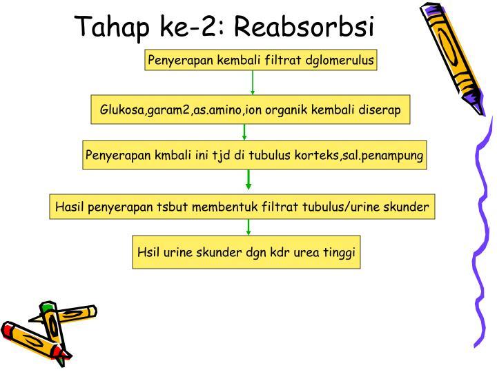 Tahap ke-2: Reabsorbsi