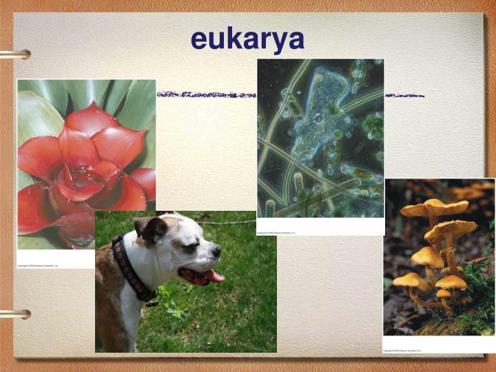 eukarya
