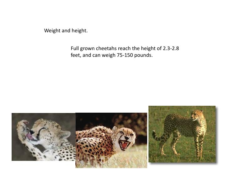 Weight and height.