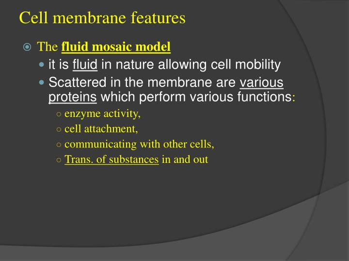 Cell membrane features