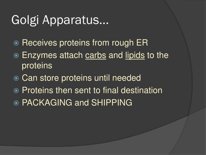 Golgi Apparatus…
