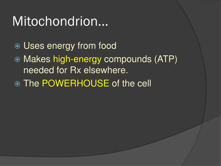 Mitochondrion…