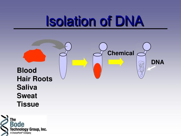 Isolation of DNA