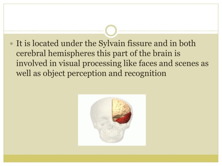 It is located under the Sylvain fissure and in both cerebral hemispheres this part of the brain is involved in visual processing like faces and scenes as well as object perception and recognition