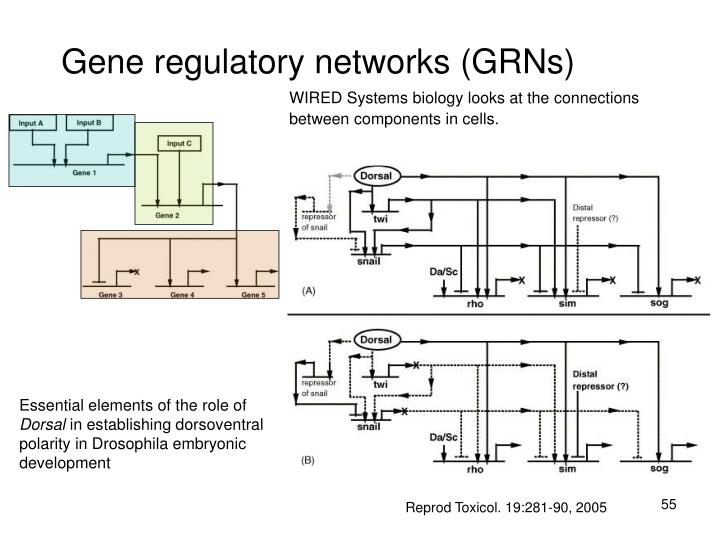Gene regulatory networks (GRNs)