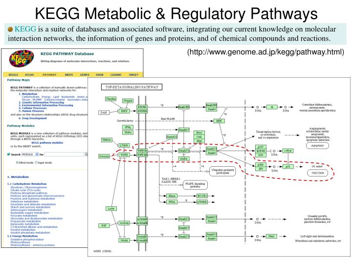 KEGG Metabolic & Regulatory Pathways