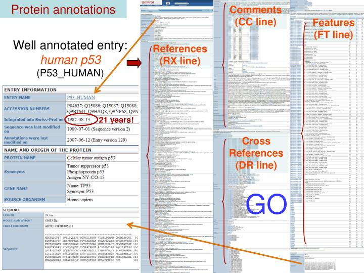 Protein annotations