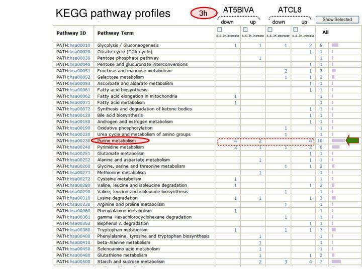 KEGG pathway profiles