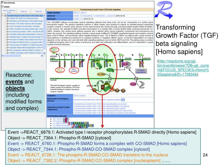 Transforming Growth Factor (TGF) beta signaling [Homo sapiens]