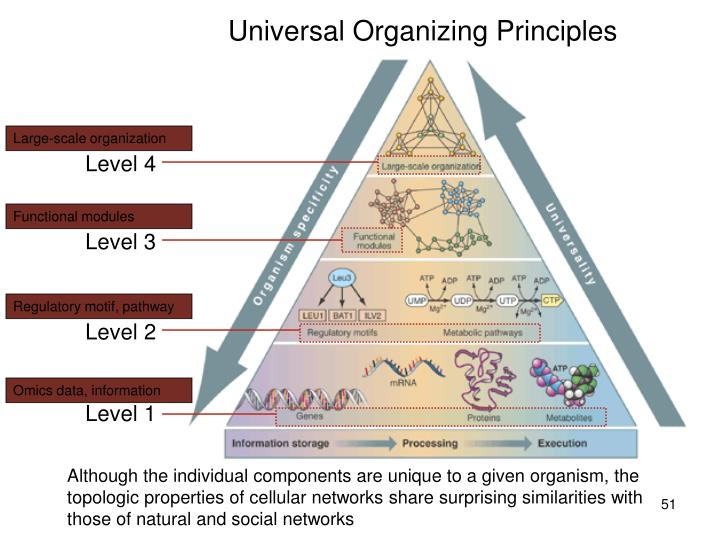 Universal Organizing Principles
