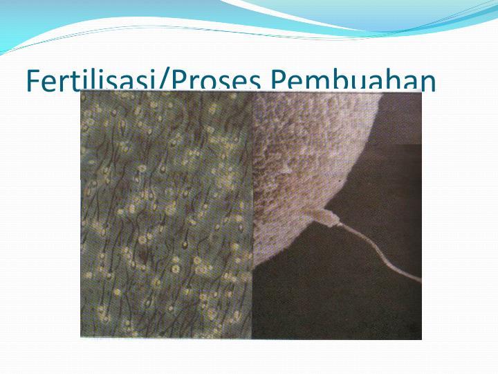 Fertilisasi/Proses Pembuahan