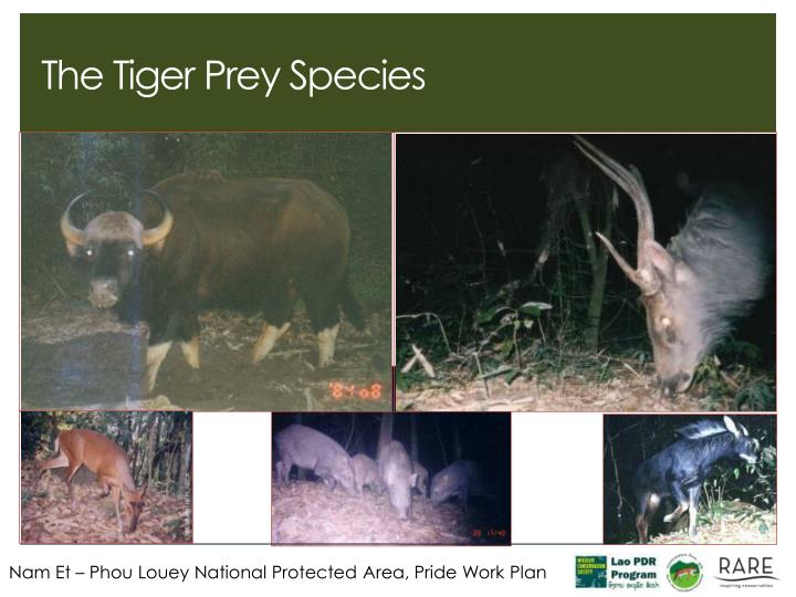 The Tiger Prey Species
