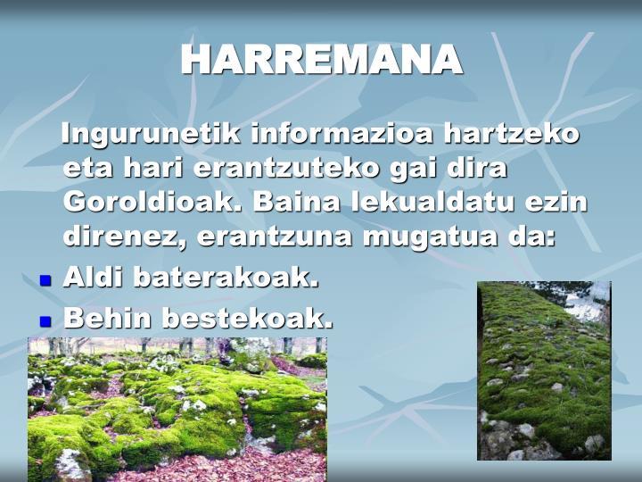 HARREMANA