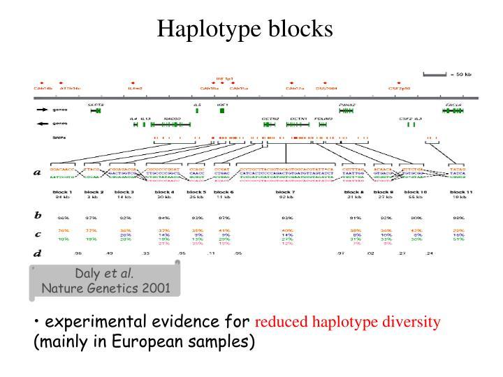 Haplotype blocks