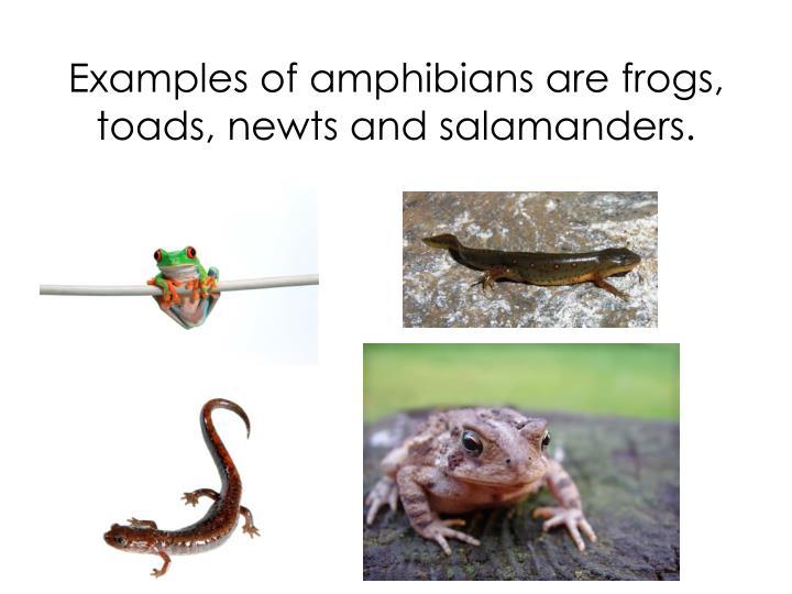 AmphibiaWeb Worldwide Amphibian Declines