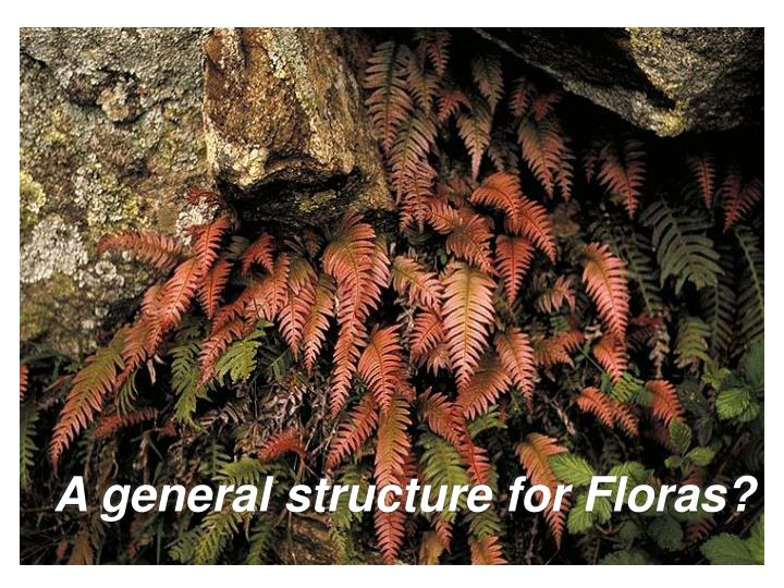 A general structure for Floras?