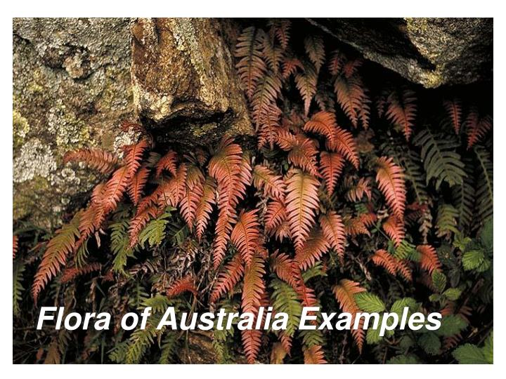 Flora of Australia Examples