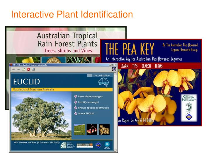 Interactive Plant Identification