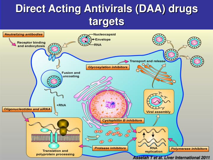 Direct Acting Antivirals (DAA) drugs targets