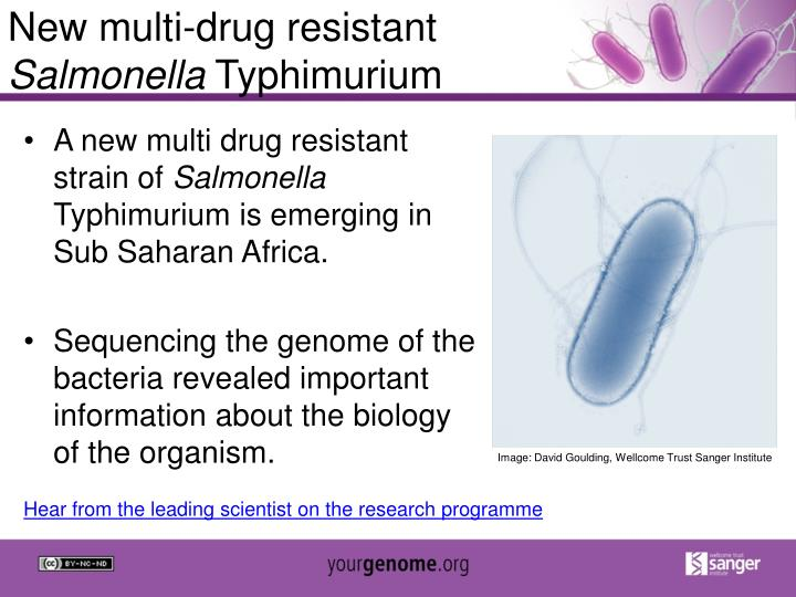 New multi-drug resistant