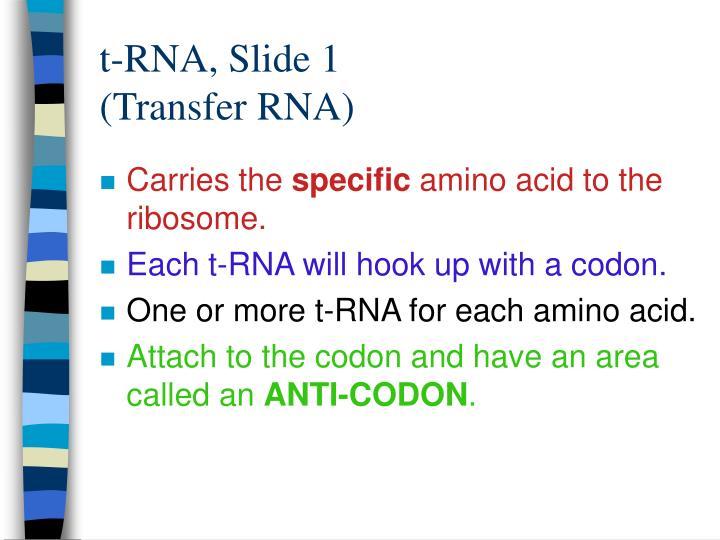 t-RNA, Slide 1