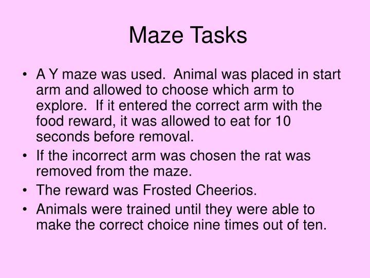 Maze Tasks
