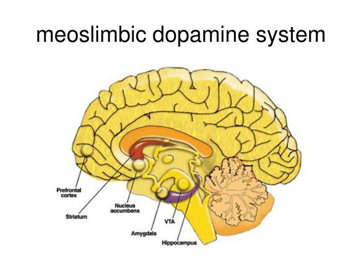 meoslimbic dopamine system