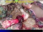 brachial pressure point1