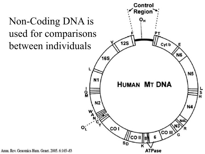 Non-Coding DNA is used for comparisons between individuals