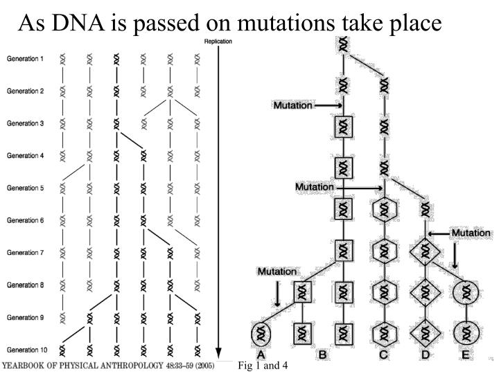 As DNA is passed on mutations take place