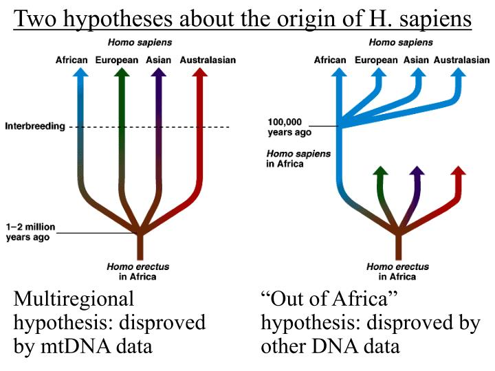 Two hypotheses about the origin of H. sapiens
