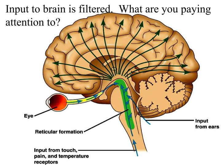 Input to brain is filtered.  What are you paying attention to?
