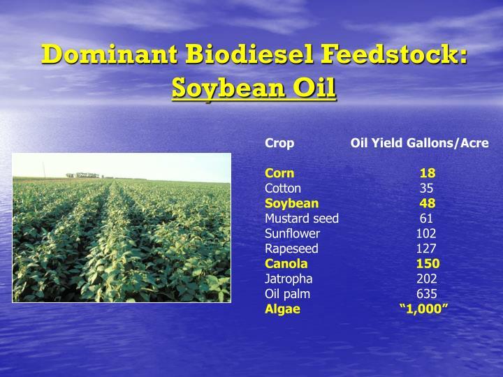 Dominant Biodiesel Feedstock: