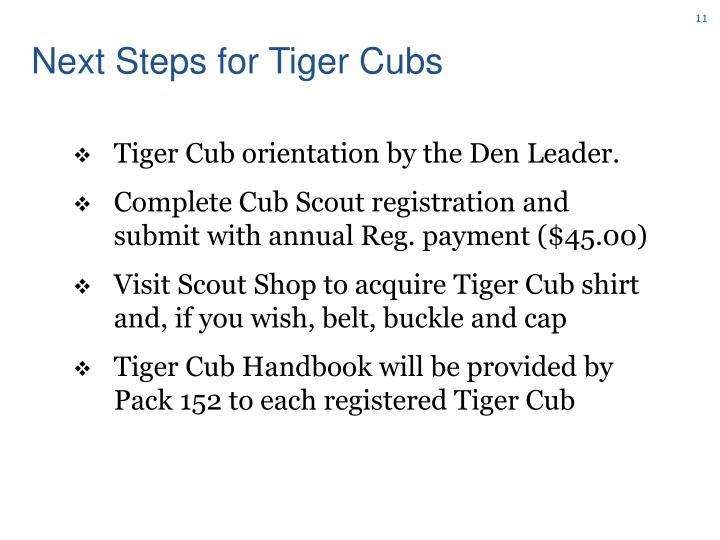 Next Steps for Tiger Cubs