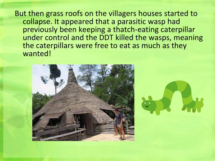 But then grass roofs on the villagers houses started to collapse. It appeared that a parasitic wasp had previously been keeping a thatch-eating caterpillar under control and the DDT killed the wasps, meaning the caterpillars were free to eat as much as they wanted!