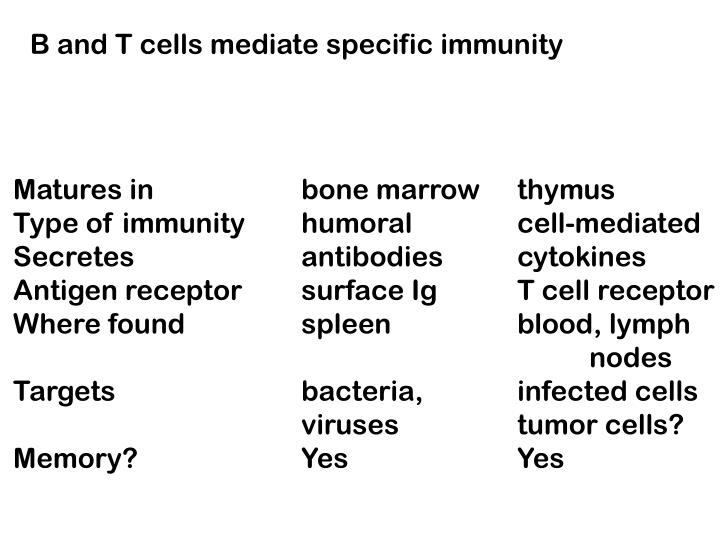 B and T cells mediate specific immunity