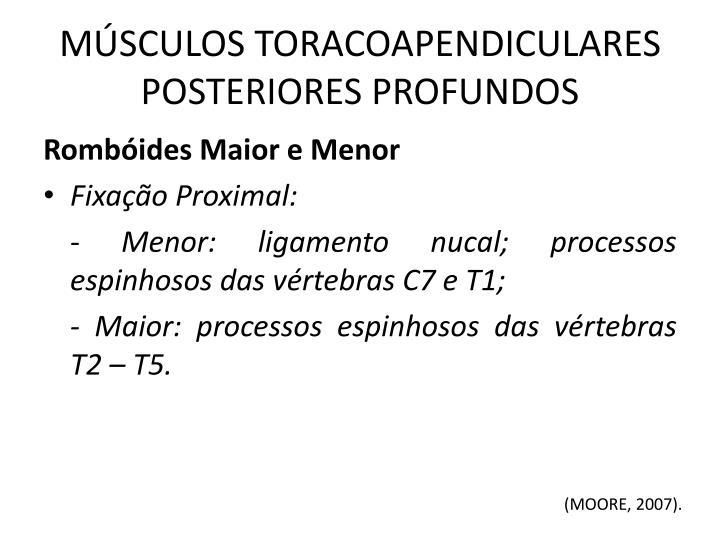 MÚSCULOS TORACOAPENDICULARES POSTERIORES PROFUNDOS