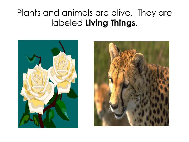 Plants and animals are alive.  They are labeled