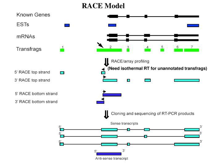 RACE Model